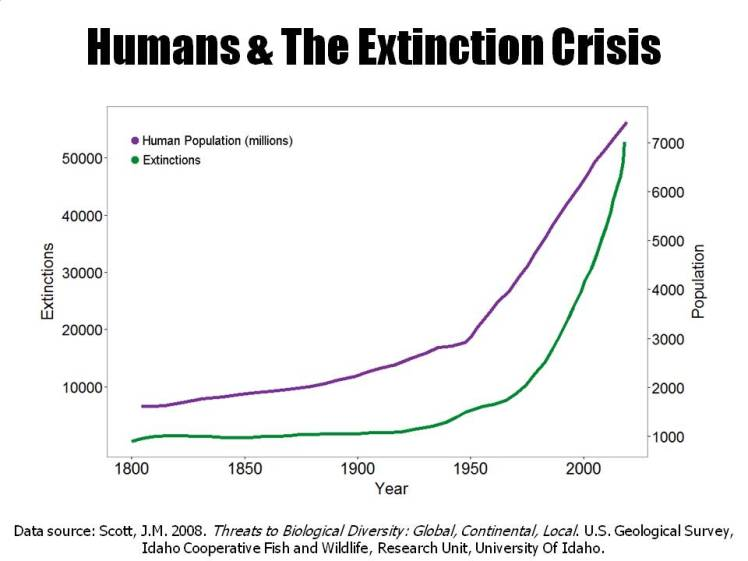 extinction wave